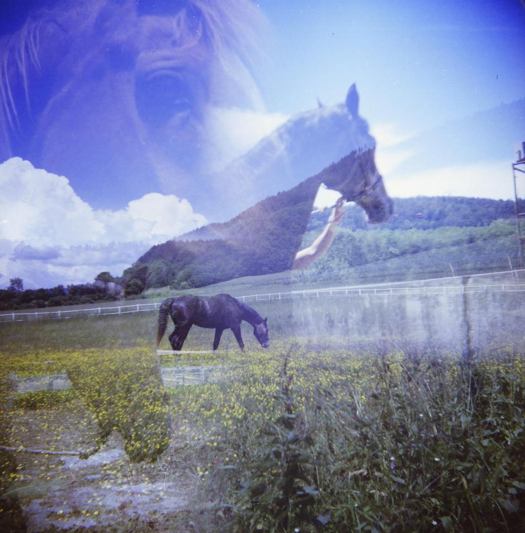 horses by mynamehasbeenstolen