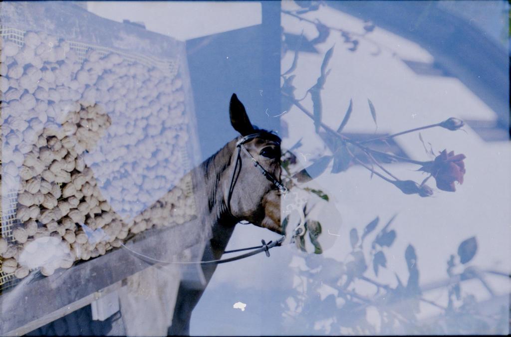 horsedouble by mynamehasbeenstolen