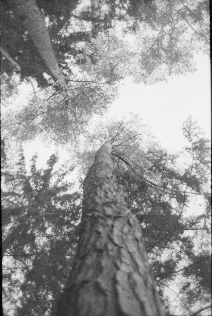 Into the woods by mynamehasbeenstolen