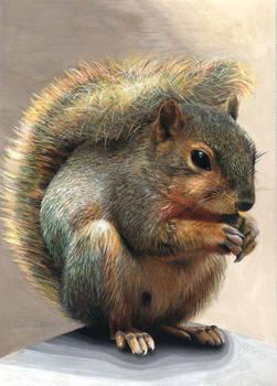 Stupid Squirrel