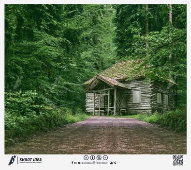 Building Wild Wooden Wild House