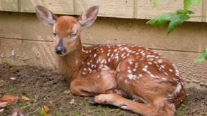 Deer Stock 001