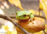 Frog by runaShe
