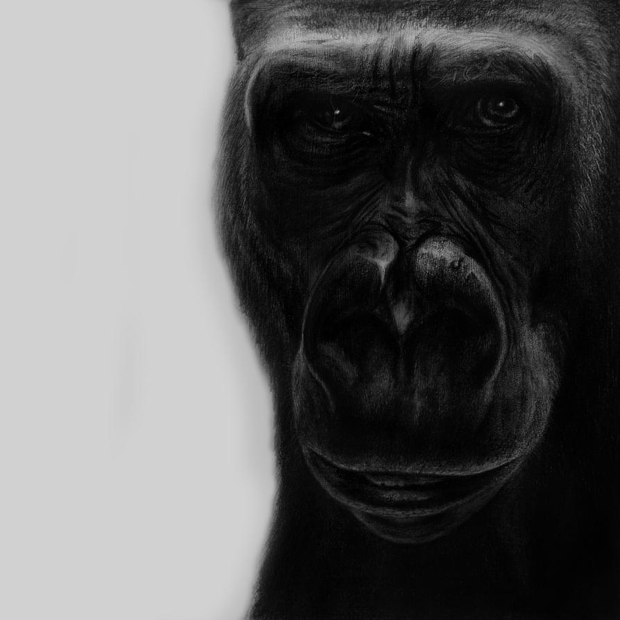 The Gorilla by SuperSal001