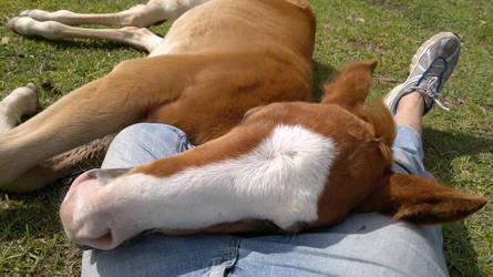 Cody asleep on my lap
