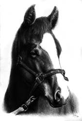 Commission foal drawing