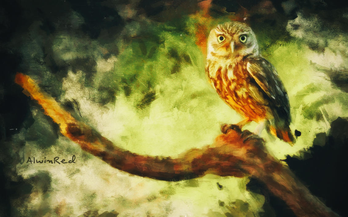 Owl Drawing by alwinred