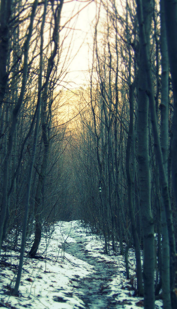 winter forest by saraswati-itawsaras