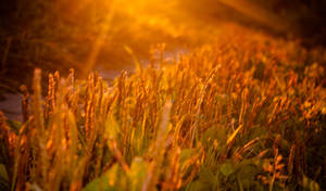 Golden Hour  - Summer