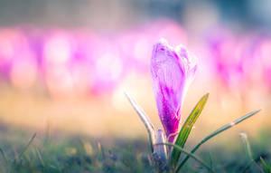 The-2nd-of-April by ZielinskiMaciej