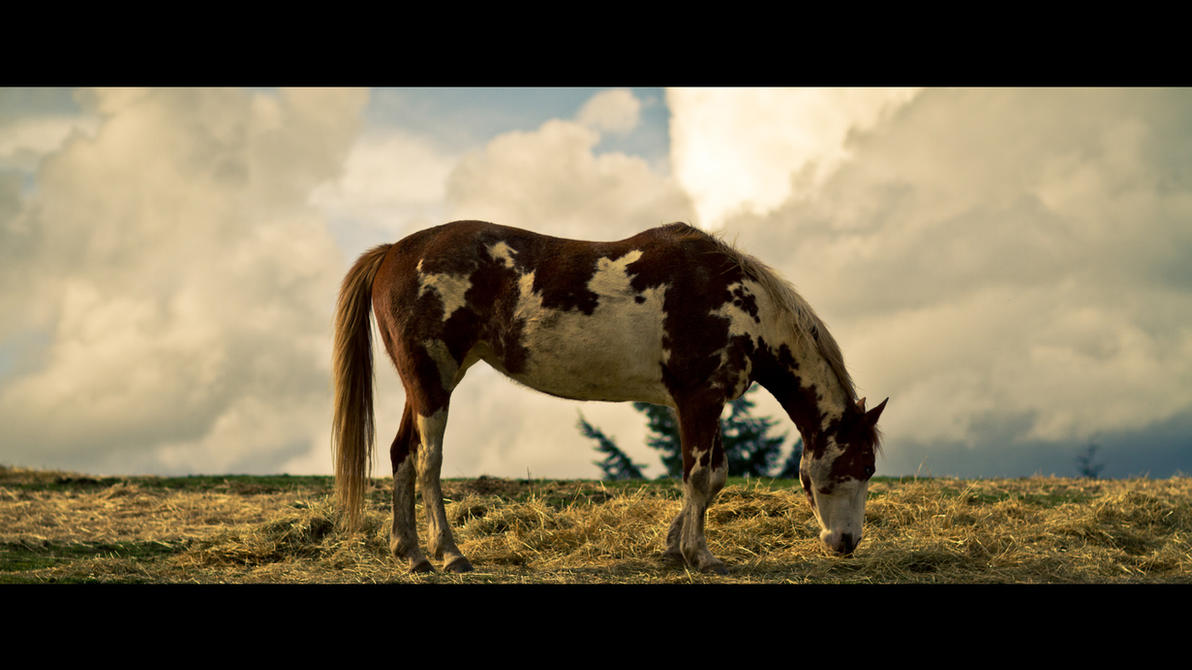 Celia - Re-created Horse_by_avngyn-d3c0sfu