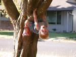 Boy in Tree 2
