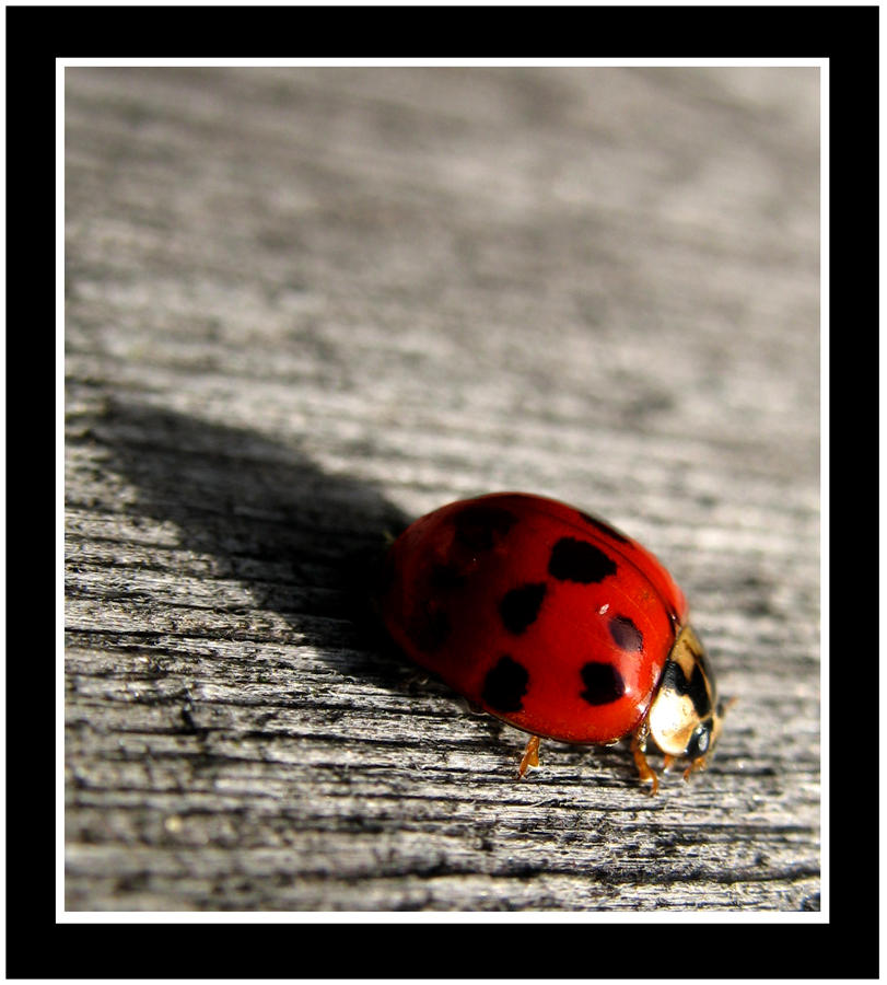 Ladybug by onedeadhero - u�ur b�cekli avatarlar