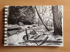 Forest-Sketch