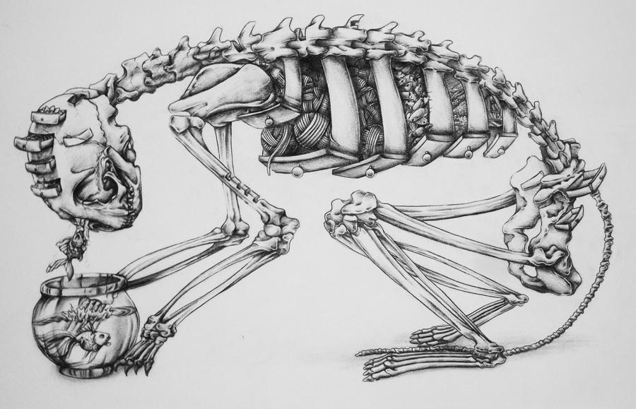 Cat Skeleton by RILLAH