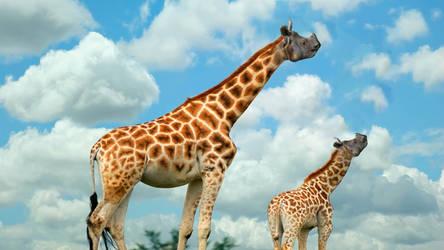 Giraffe-rhino