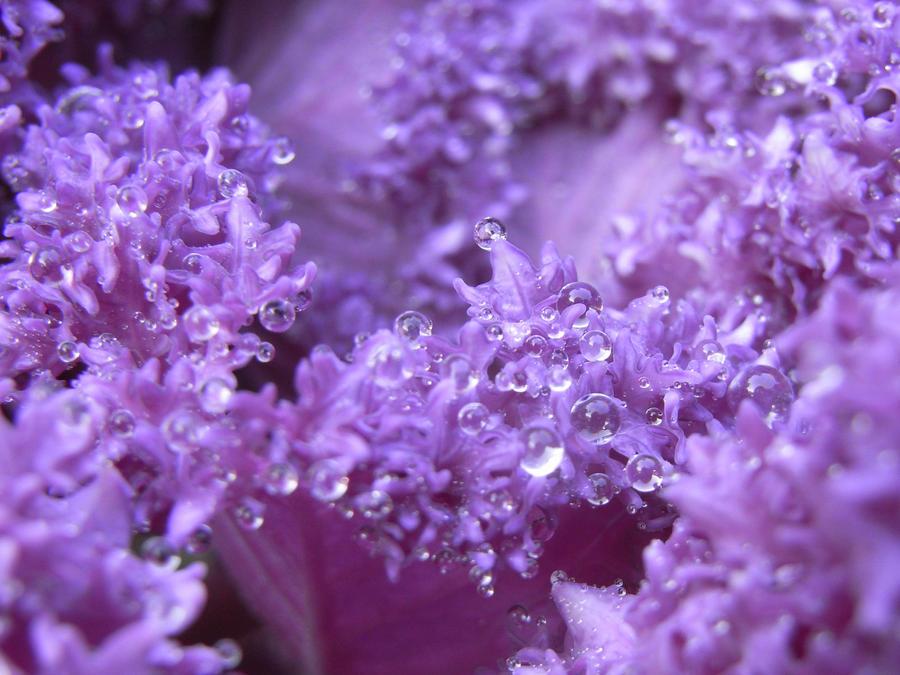 aquatic freckles by Zochasia