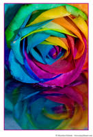 Happy Roses 8 by MarjoleinART-Photos