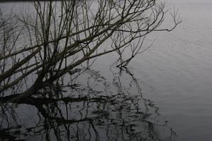Grey Reflections by wafitz