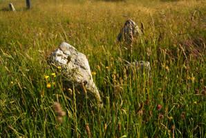 Rocks in Grass by wafitz