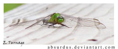 317 - Dragonfly
