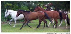 332 - The Herd