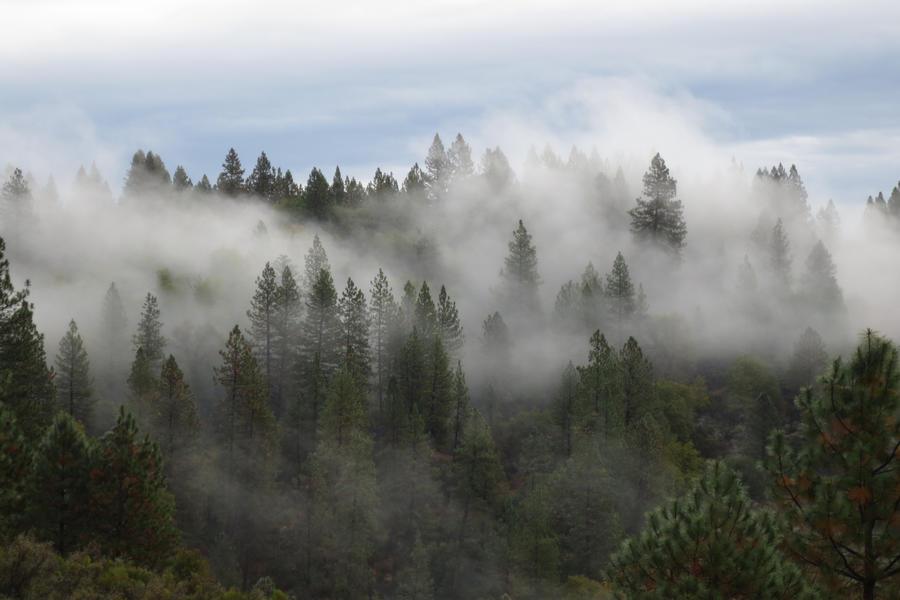 377 - Northern California by absurdus