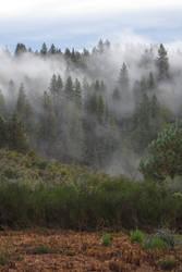378 - Northern California