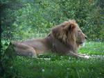 164 - Lion