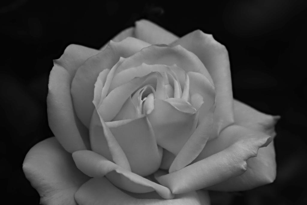 Simply Romantic 72 by DorianStretton