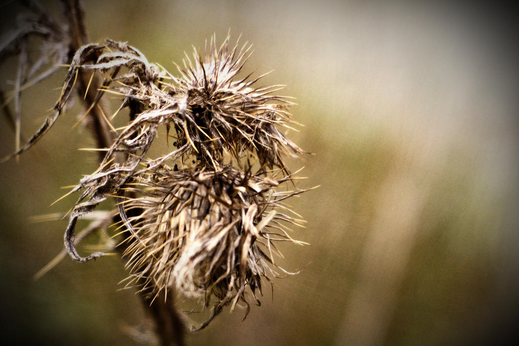 Signified Signifier 82 by DorianStretton