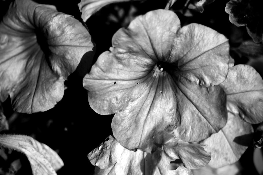Botanical Monochrome 35 by DorianStretton