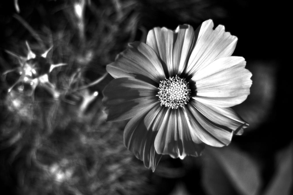 Botanical Monochrome 37 by DorianStretton