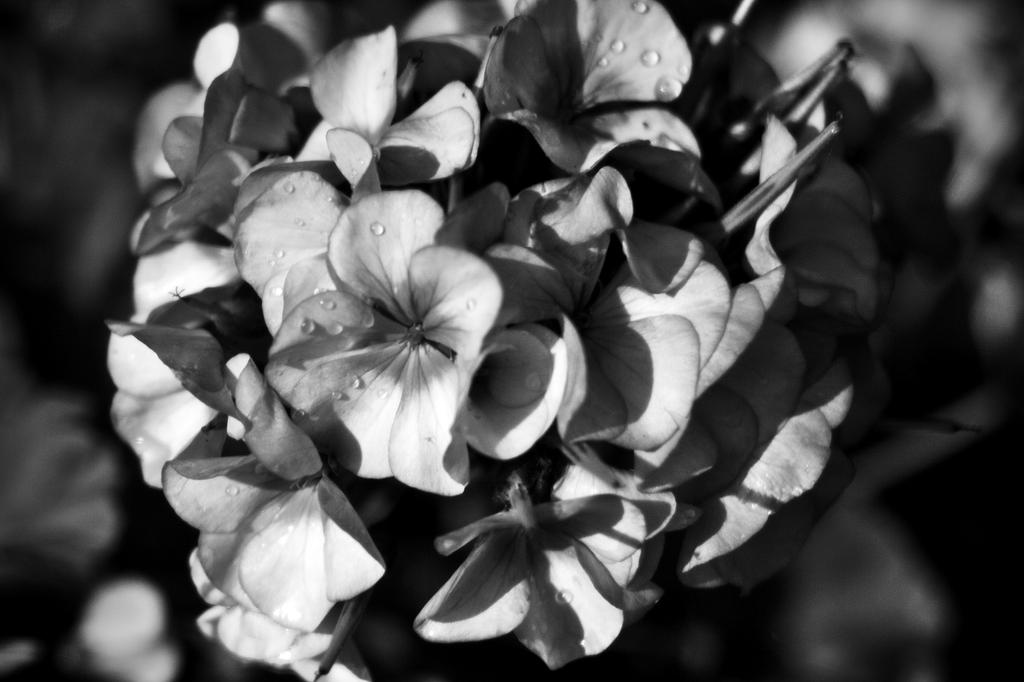 Botanical Monochrome 38 by DorianStretton