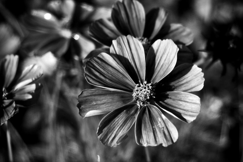 Botanical Monochrome 39 by DorianStretton