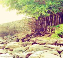 Wall Tree By ArtPaper App