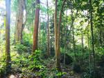 Jungle Stock