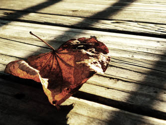 Forgotten Heart by Iceona