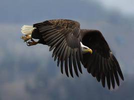 Falcon by Tiago82
