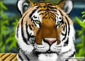 tiger by jay-c1