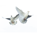Flying Birds PNG (3)