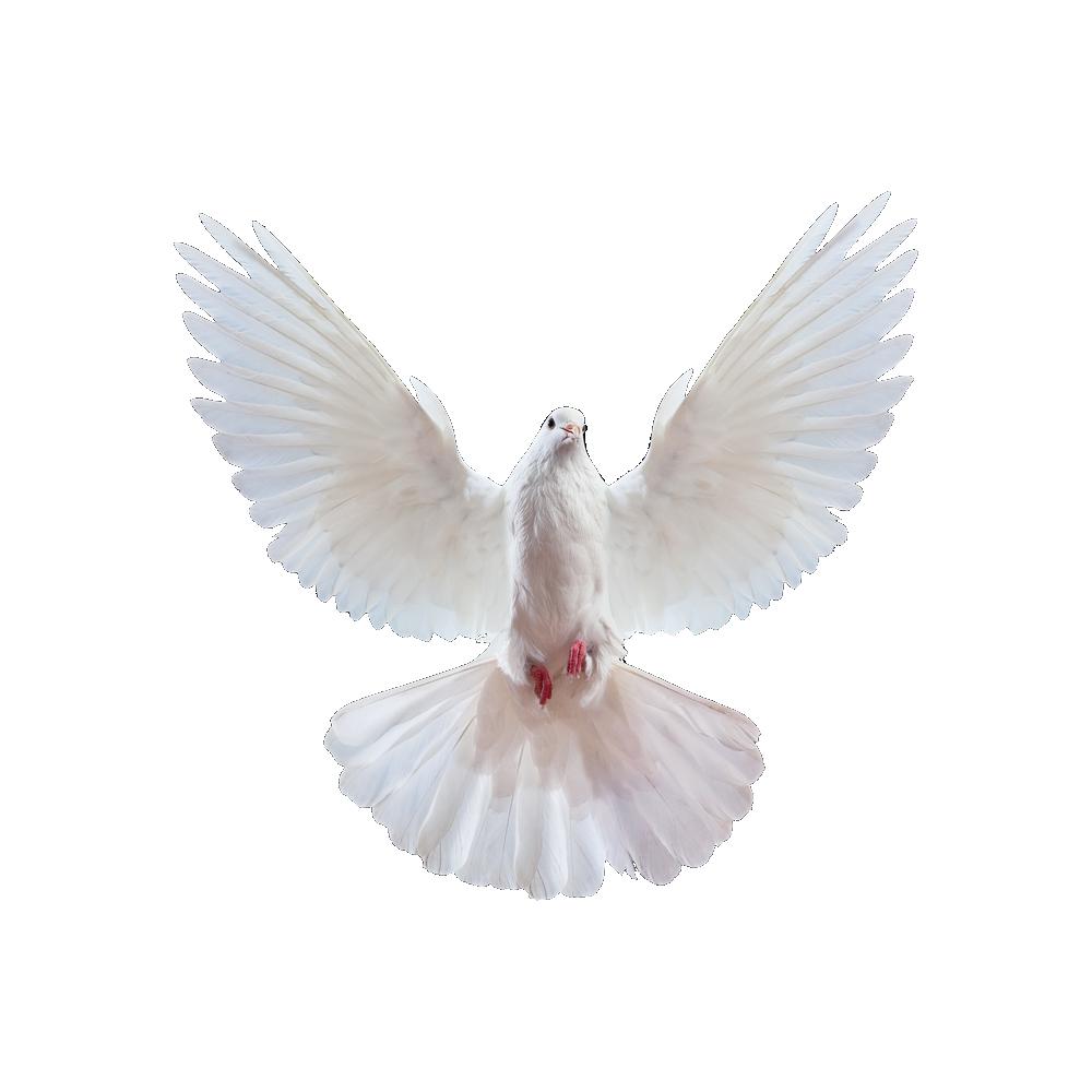Dove PNG 20 by agusrockforlife on DeviantArt