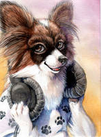 Papillion by hibbary