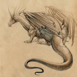 Conte dragon by hibbary