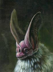 leaf nosed bat by hibbary
