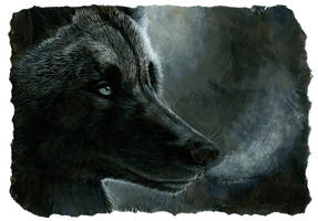 black wolf by hibbary