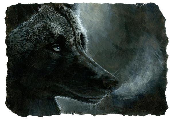http://fc02.deviantart.net/fs70/i/2010/316/2/9/black_wolf_by_hibbary-d32pc8c.jpg