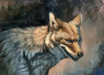 Silver Eyed Coyote