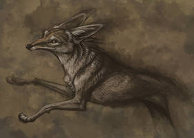 Coyote Design by hibbary