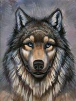 Wolf by hibbary